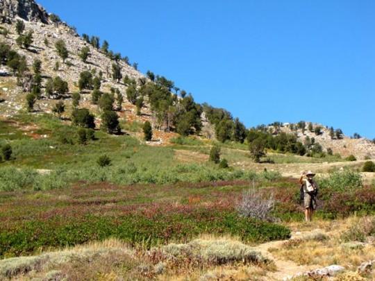 Hiking Through Sagebrush