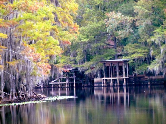 Cypress Swamp, Caddo Lake State Park