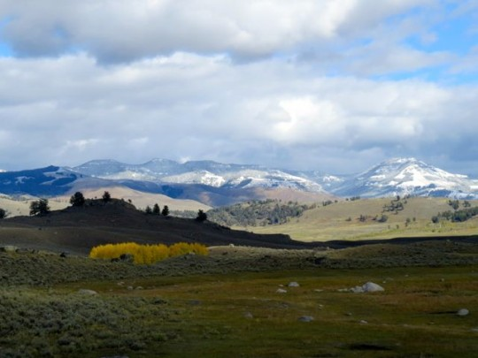 Lamar Valley With Snow