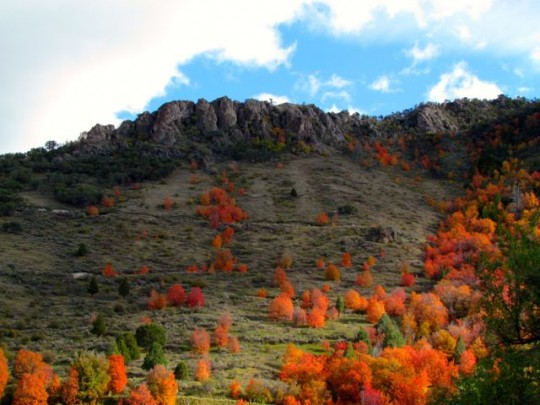 Autumn Color On The Hillside