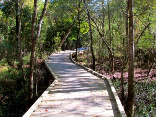 Boardwalk Through The Swamp