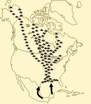 Neotropical Migration Routes