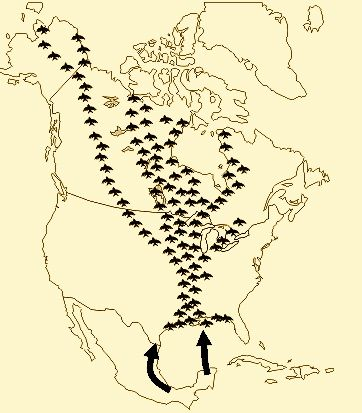 Flyways from the Yucatan Peninsula to North America
