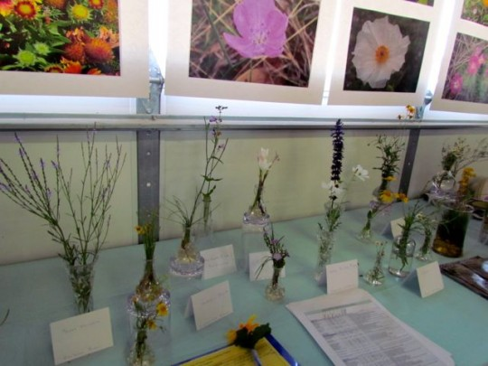 Wildflower Display At Birding Festival