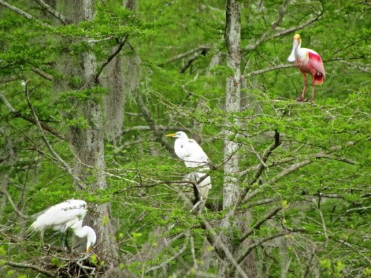 Sharing Nesting Territory