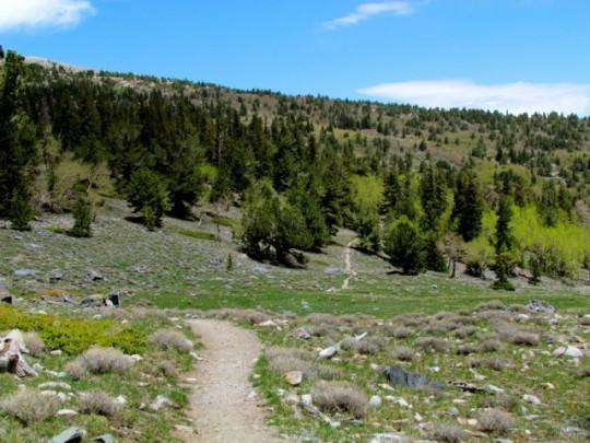 The Alpine Loop Trail