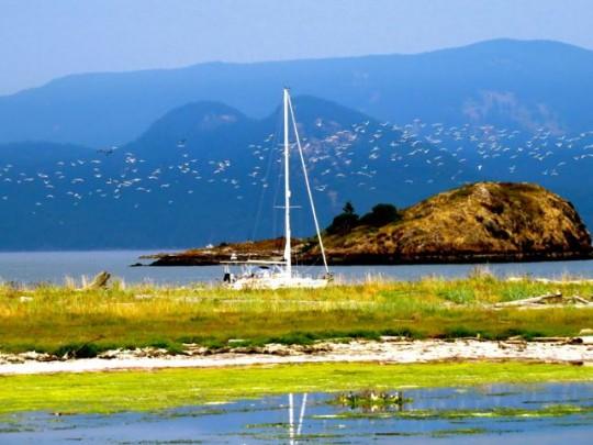 Flower Island And Gulls