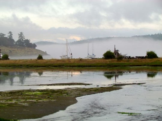 Across The Marsh On A Foggy Afternoon