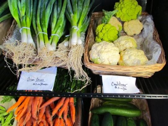 Organic Veggies Just Harvested