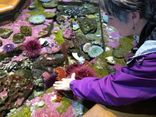 Tide Pool Petting Zoo