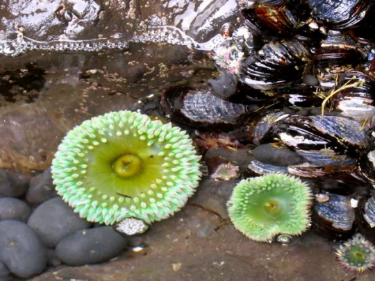 Treasures In The Tidepools