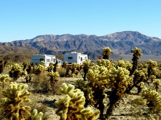 Caravanning In A Cholla Forest