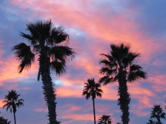 Tropical Sunset In Arizona
