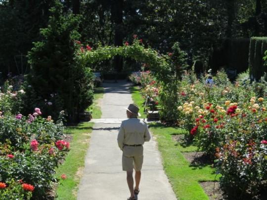 Strolling Through The Rose Garden
