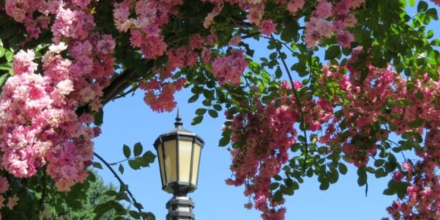 The City Of Roses: Portland, Oregon