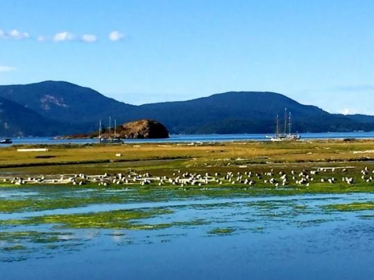 Looking Across The Marsh