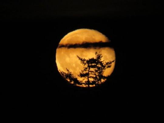 Magical Moonrise