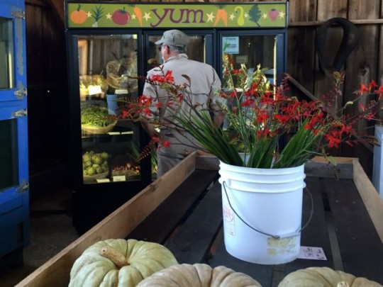 Shopping At The Farm Stand