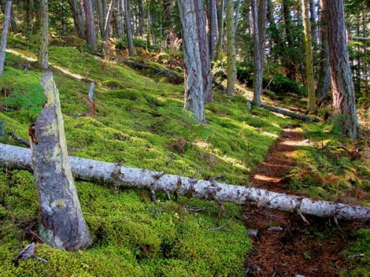 Sun Dappled Mossy Trails