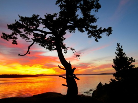 The Natural Beauty Of Lopez Island