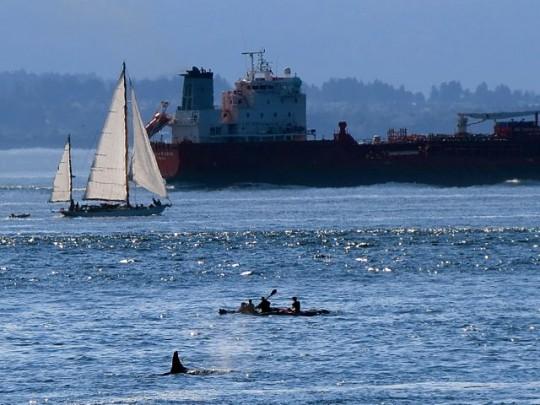 Orca In Traffic Jam
