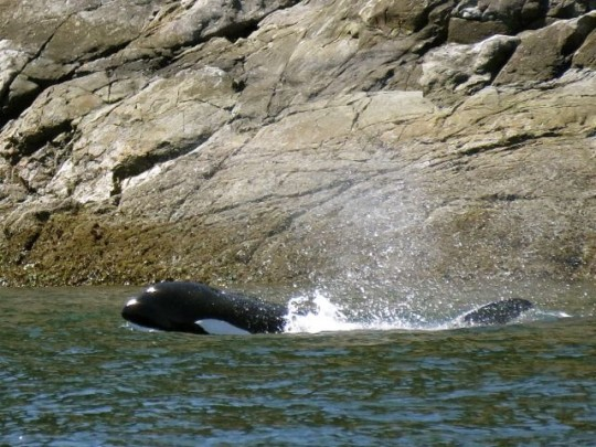 A View Of More Than The Dorsal Fin