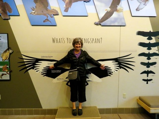 Measuring Wingspan
