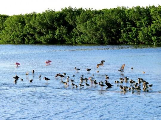 Wading Bird Convention