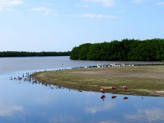 Peaceful Pond At Ding Darling Refuge