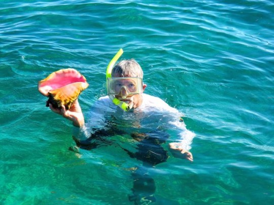 A Queen Conch (Returned To The Ocean)
