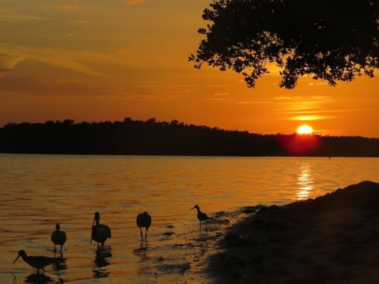 Sunset At Curry Hammock