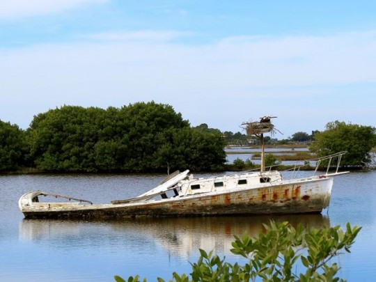 Osprey Nest On An Abandoned Boat