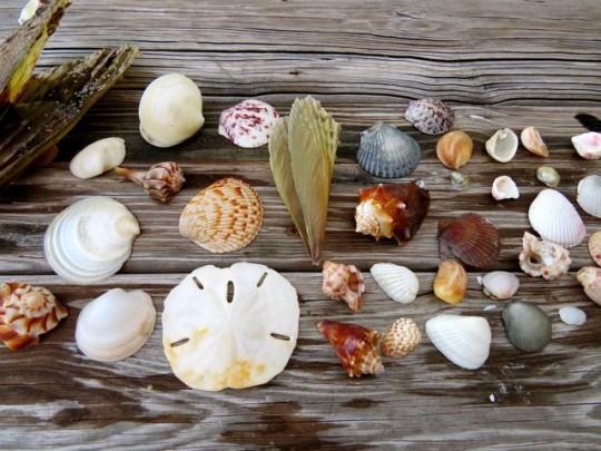 A Few Shells Gathered On A Beach Walk