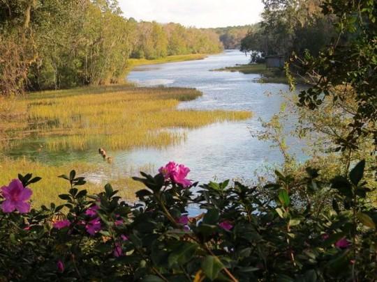 Azaleas On The Rainbow River