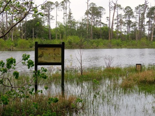 One Of Many Ponds In The Refuge
