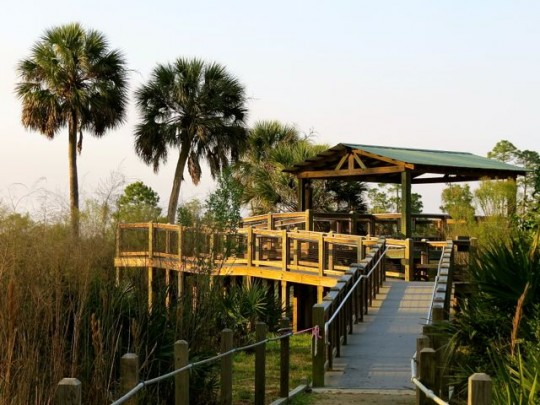 Boardwalks At St. Marks