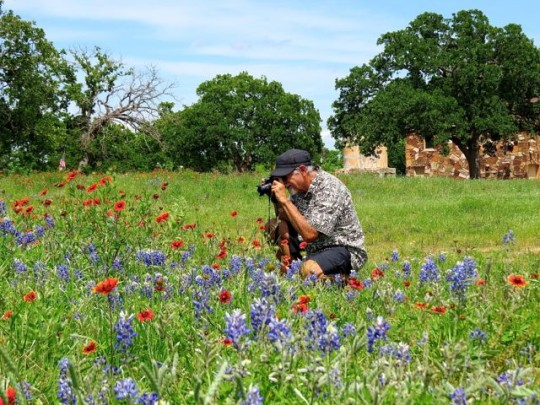 Wildflower Season In Texas