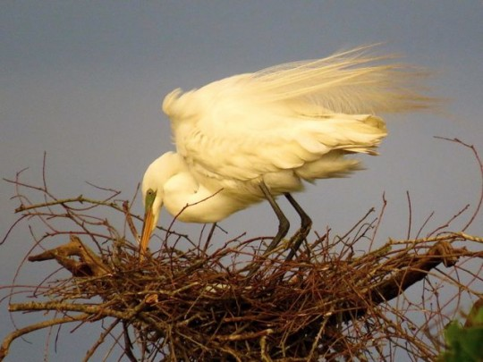 Tending The Nest