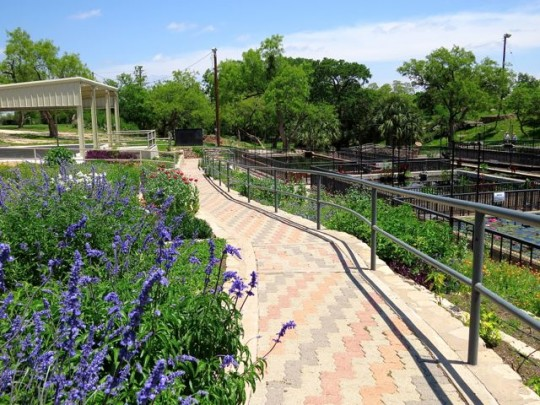 San Angelo Water Lily Gardens