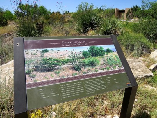 Wonderful Displays On Desert Environments
