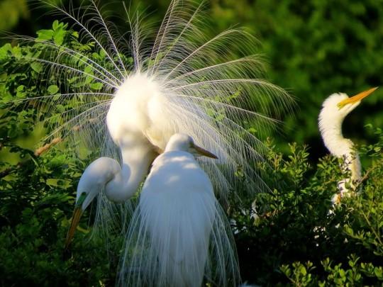 A Birder's Paradise: High Island, TX