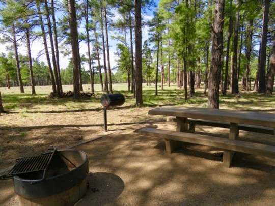 Our Backyard At Pine Grove Campground