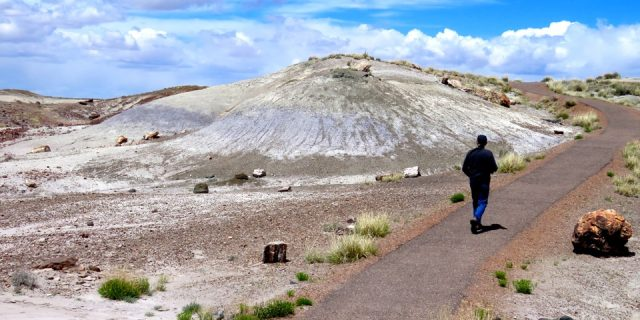 A Stroll Through The Petrified Forest