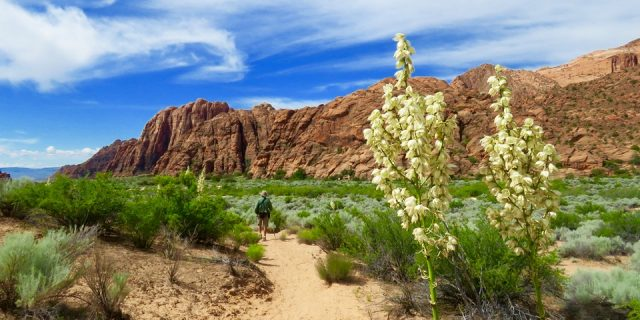 Beautiful Snow Canyon: St. George, Utah