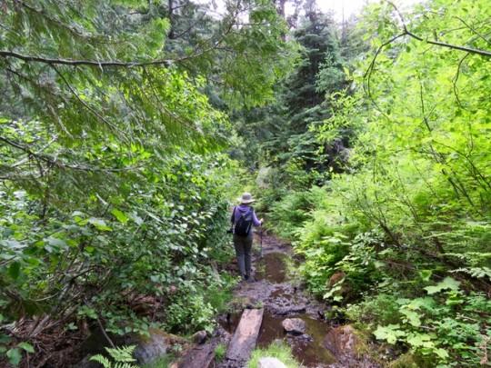 A Muddy Stretch On Cedar Creek Trail