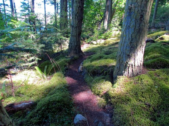 Magical Mossy Trails Above Watmough Bay