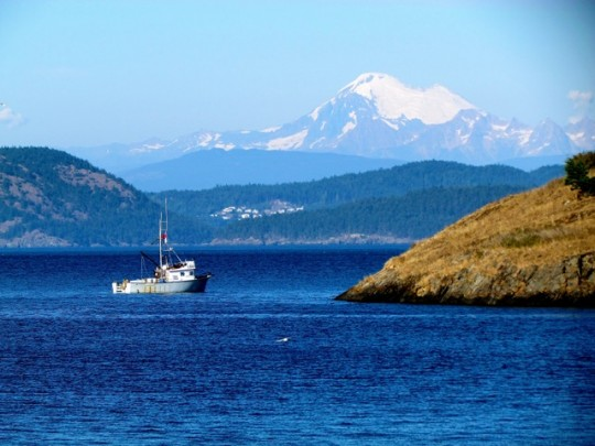 A View Of Mt. Baker