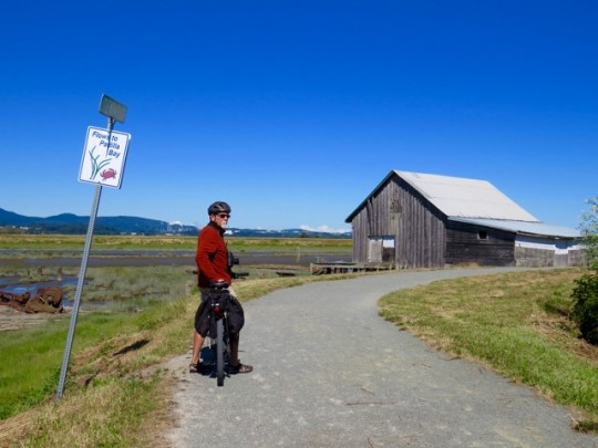 Biking Around Padilla Bay