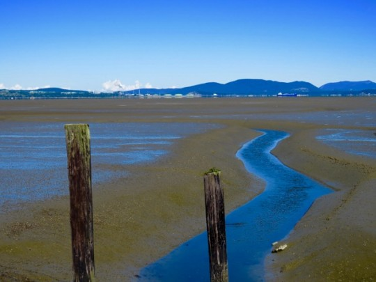 Low Tide At Padilla Bay