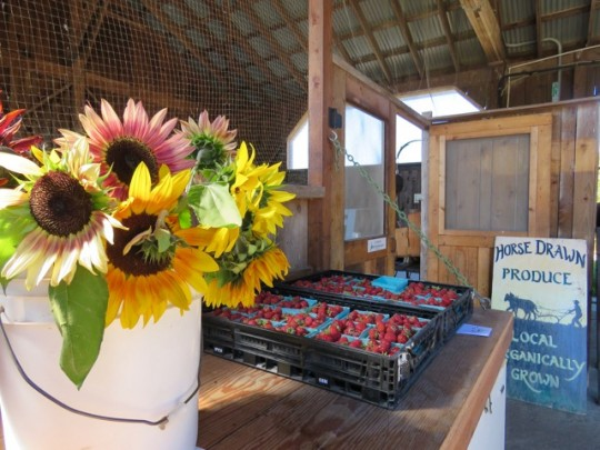 Our Favorite Farmstand